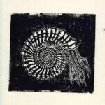 ammonite_linogravure_mmk_artiste_lyon