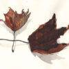 feuilles_mortes_mmk_myriam_sitbon