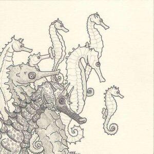 hippocampe_dessin_mmk_myriam_sitbon