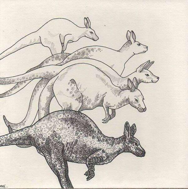 kangourous_dessin_mmk_myriam_sitbon