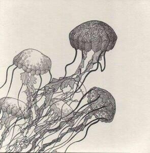 meduses_dessin_mmk_myriam_sitbon