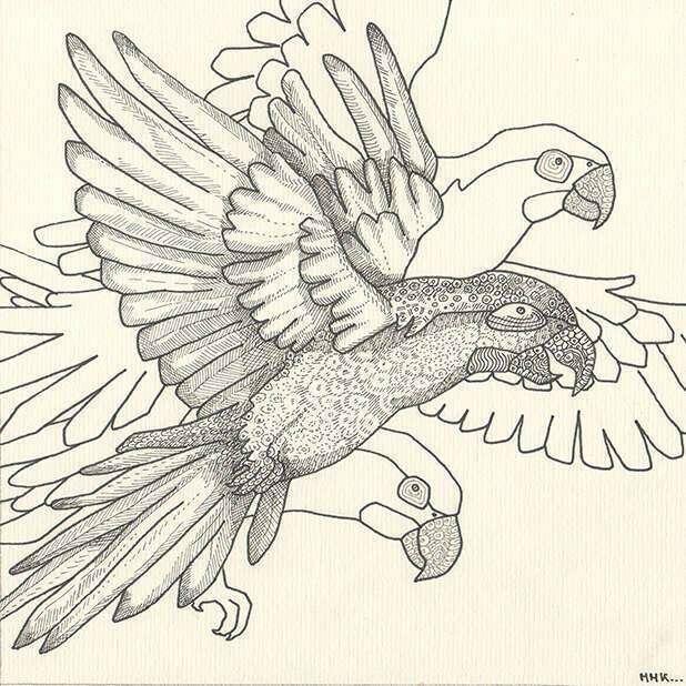 perroquet_dessin_mmk_myriam_sitbon