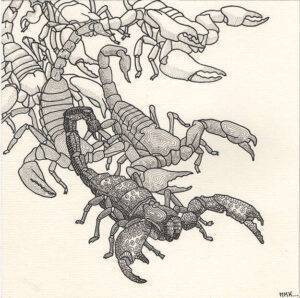 Carte scorpions