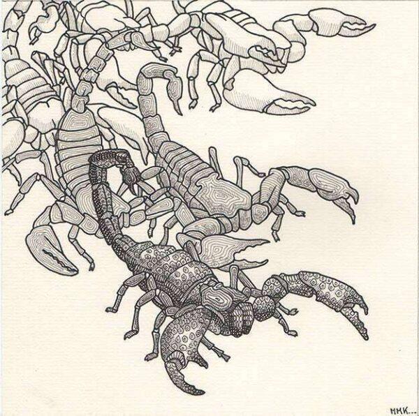 scorpions_dessin_mmk_myriam_sitbon