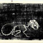 squelette_ecureuil_linogravure_mmk_artiste_lyon